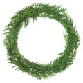 Cedar cypress wreath leaf over white background cupressus nootkatensis Stock Photo