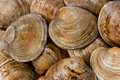 Cedar Key Clams Stock Photos