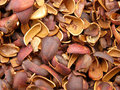 Cedar nuts background with brown peel Stock Photo