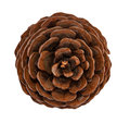 Cedar pine cone isolated Royalty Free Stock Photos