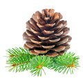 Cedar Pine Cone And Needles Is...
