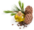 Cedar pine oil bottle of cones and nuts on white background Stock Image