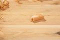 Cedar shaving on wood close up of a unfinished plank Royalty Free Stock Images