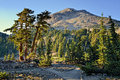 Cedar trees and lassen peak lassen volcanic national park pines below evening at Stock Photography
