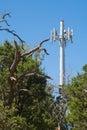 Cedar trees near a cell tower Royalty Free Stock Photo