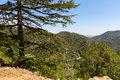 Cedar valley in Cyprus mountains Royalty Free Stock Photo