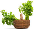 Celery in basket a wicker with a two big head of on a white background Stock Photography