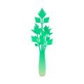 Celery stem isolated on white background