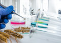 Cell culture assay to test genetically modified Royalty Free Stock Photo
