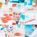 Cell culture work in the lab collage scientists perform experiments Stock Image