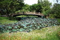 Cement Bridge Across Water Lily Field Royalty Free Stock Photo