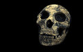 Cement skull isolated on black background Stock Photo