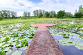 Cement walkway middle of lotus pond Royalty Free Stock Photo