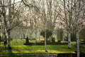 Cemetary morning peace the sun and leafless branches of birches creates a peaceful atmosphere at the cemetery Royalty Free Stock Images