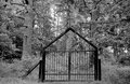 Cemetery gates old iron at a in the forest in black an white tone Stock Image