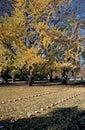 Cemetery On The Gettysburg Civ...