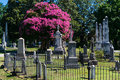 Cemetery tree in bloom Royalty Free Stock Photo