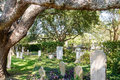 Cemetery under old oak tree an a massive southern Stock Photo