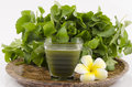 Centella asiatica asiatic pennywort centella asiatica linn urban herbal drink has medicinal properties Stock Images