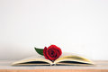 A centered open book with a red rose flower on it Royalty Free Stock Photo
