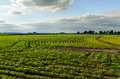 Central Illinois farmland. Royalty Free Stock Photo