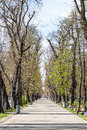 Central park in cluj napoca romania april is a large public urban and was founded the th century and Stock Photography
