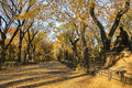 Central park New York autumn Royalty Free Stock Photo