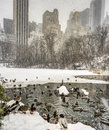 Central park new york city after sniw at the lake in winter Royalty Free Stock Photo