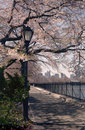 Central Park Spring Cherry Blossoms , NYC Stock Image