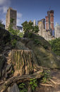 Central Park tree stump Royalty Free Stock Images