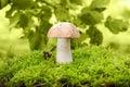 Cep mushroom Royalty Free Stock Photos