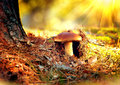 Cep mushroom growing in autumn forest boletus Royalty Free Stock Photos