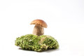 Cep mushroom on moss one green forest isolated over white Royalty Free Stock Images