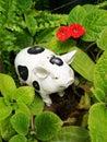 White ceramic pig Royalty Free Stock Photo