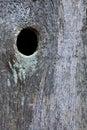 Cerca de madera con el knothole Fotos de archivo libres de regalías