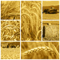 Cereal crops and harvest collage made of pictures about the Royalty Free Stock Photo
