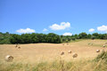 Cereal harvest tuscany image field in italy Royalty Free Stock Photo