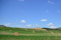 Cereal harvest tuscany image field in italy blue and clear sky picture taken in july Royalty Free Stock Image