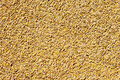 Cereal wheat grain texture pattern Royalty Free Stock Image