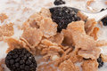 Cereals with blackberry Stock Photography