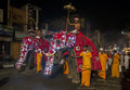 Ceremonial elephants parade down a street in Kandy in Sri Lanka during the Esala Perahera. Royalty Free Stock Photo