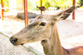 Cerfs communs dans la cage zoo animal Photos libres de droits