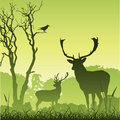 Cerfs communs mâles de mâle Photo stock