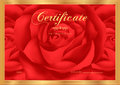 Certificate diploma of completion rose design template flower background with floral pattern border frame award achievement Stock Image