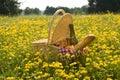 Cestino di picnic con vino, pane e frutta Fotografia Stock