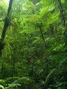 Lluvia bosque