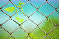 Chain link fence with fresh plant Royalty Free Stock Photography