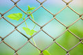 Chain link fence with fresh plant Royalty Free Stock Photos