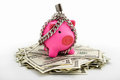 Chained piggy bank on pile of dollars Stock Images