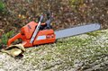 Chainsaw on a tree trunk Stock Image